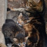 Кошка с недавно родившимися котятами