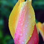 Розово-жёлтый в дождинках