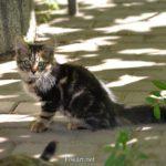 Милый уличный котёнок