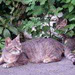Уличная кошка с котёнком у забора