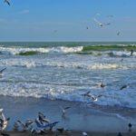 Чёрное море в ветреный день в начале ноября. Волны и чайки