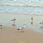 Пять чаек на мокром песке после отхода волны