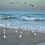 Морской берег, волны и чайки. Предвечернее время. Одесса