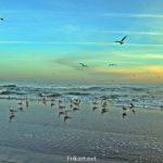 Чайки на берегу и в полёте. Накануне заката