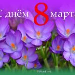 Сиреневые крокусы, открытка 8 марта