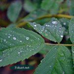 Серебряные капельки дождя на молодых весенних листьях