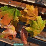 Яркие осенние листья на скамейке