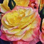 Роза жёлто-розовая, фото-картина