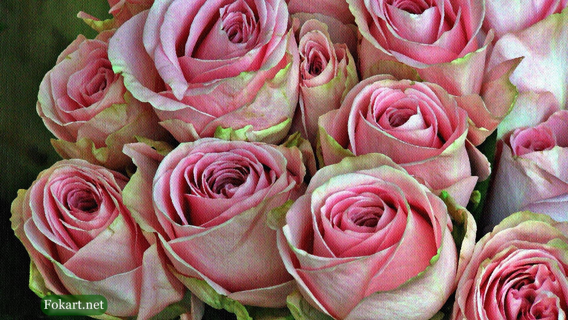 Розово-салатовые розы, фото-картина