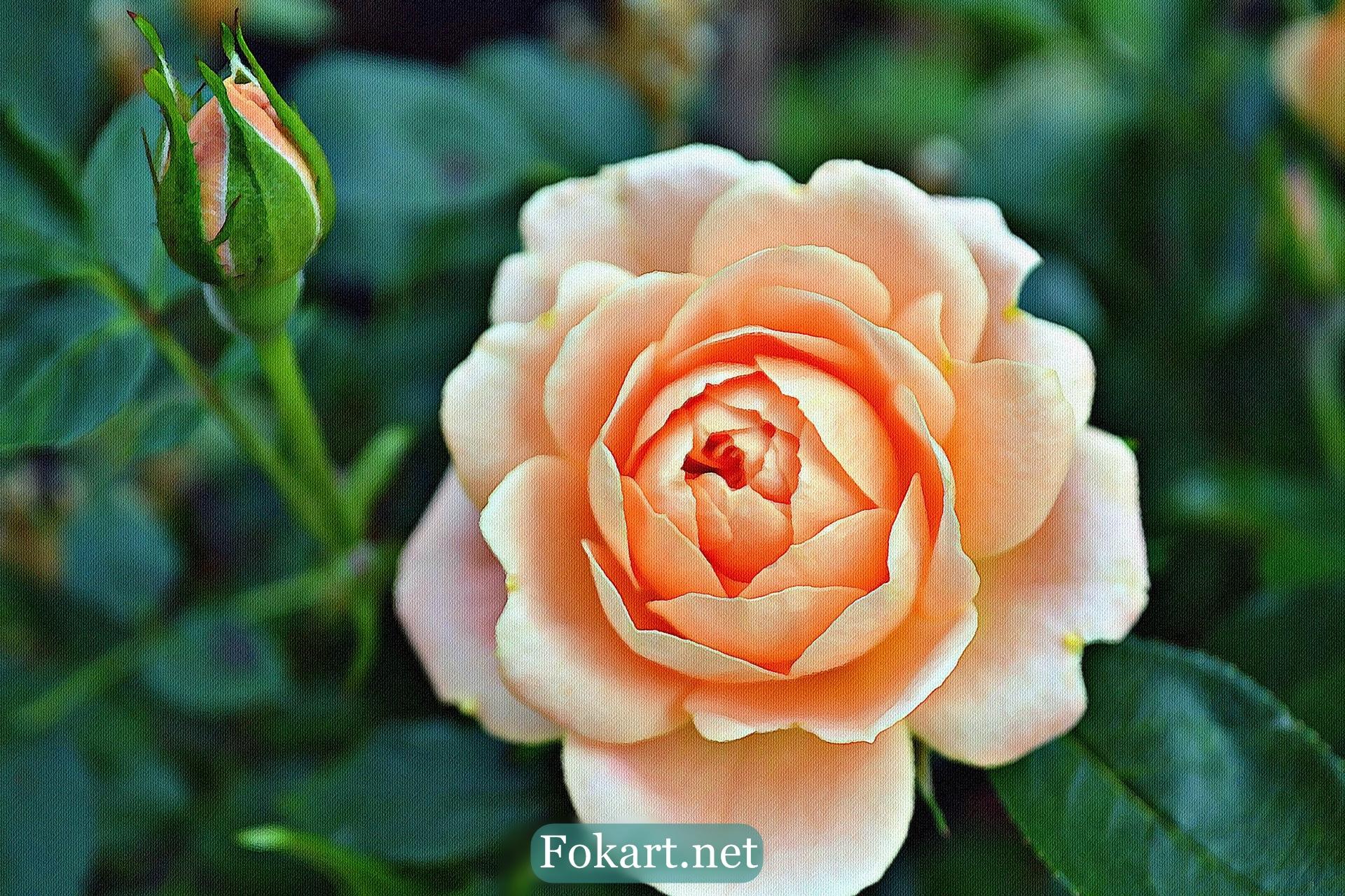Чайная роза, фото-картина