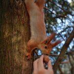 Белка спустилась по дереву взять орех; милое фото