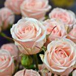 Букет розовых роз в марте